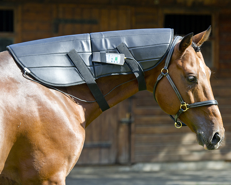 OMI Horses Wrap for Neck